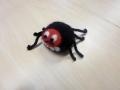 Kurvameelne ämblik